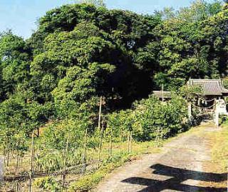 明見神社の自然林 松山市ホーム...
